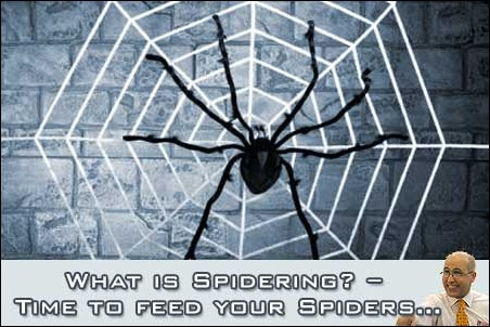 What is Spidering? It's High time you learn to feed your Spiders!
